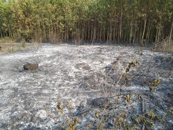 Lại xảy ra liên tiếp 2 vụ cháy rừng tại huyện Bình Sơn ảnh 2