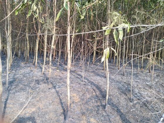 Lại xảy ra liên tiếp 2 vụ cháy rừng tại huyện Bình Sơn ảnh 4