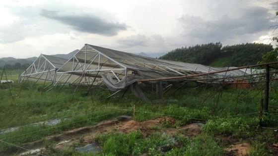 Lốc xoáy cuốn đổ sập hàng chục ngôi nhà ở Quảng Ngãi ảnh 6