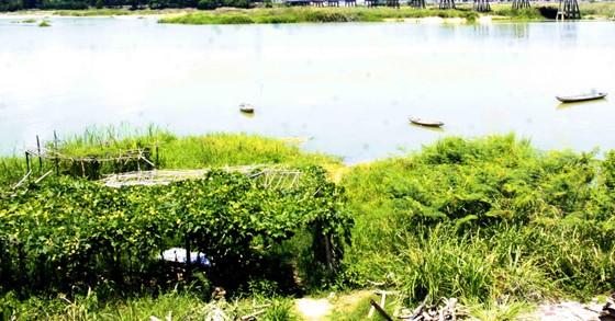 Hội Nghề cá Quảng Ngãi lo lắng nguồn lợi thủy sản, sinh kế dự án Đập dâng hạ lưu sông Trà Khúc  ảnh 3