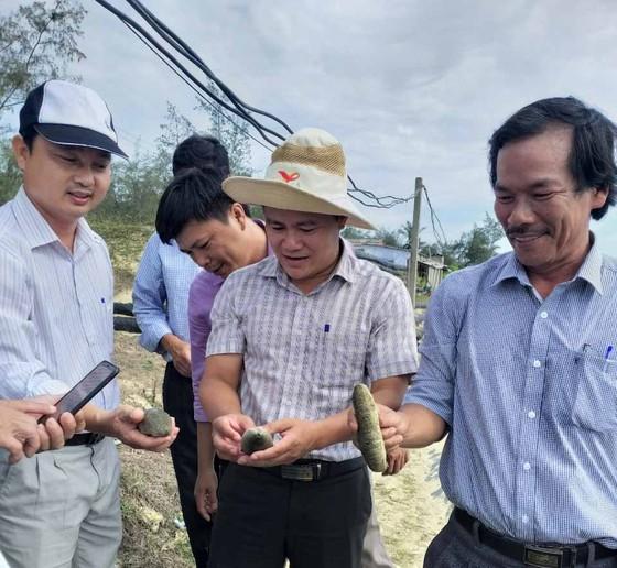 Quảng Ngãi: Đề xuất 1,9 tỷ tiếp tục nhân rộng mô hình nuôi thử nghiệm hải sâm ghép ốc hương  ảnh 2