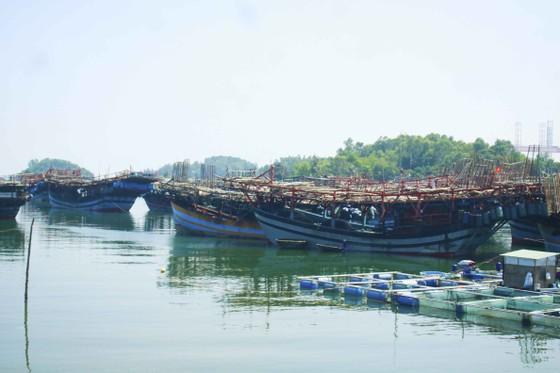 Quảng Ngãi: Ngư dân rơi xuống biển mất tích ảnh 1