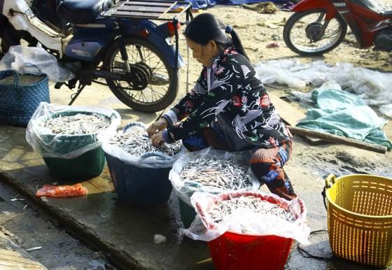 Ngư dân Quảng Ngãi vui mùa cá cơm đến sớm ảnh 9