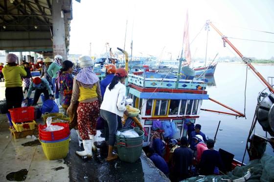 Ngư dân Quảng Ngãi vui mùa cá cơm đến sớm ảnh 4