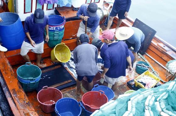 Ngư dân Quảng Ngãi vui mùa cá cơm đến sớm ảnh 3