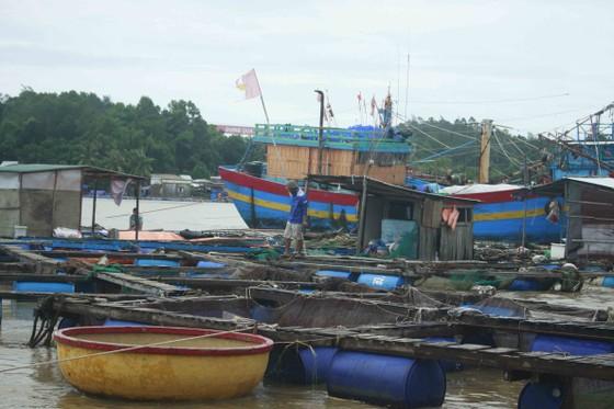 Lũ bùn đổ về, cá chẽm nuôi sông Trà Bồng chết hàng loạt ảnh 3