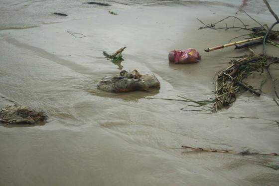 Củi, rác thải phủ khắp hạ lưu sông Trà Bồng sau bão số 5 ảnh 4