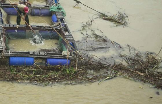 Củi, rác thải phủ khắp hạ lưu sông Trà Bồng sau bão số 5 ảnh 6