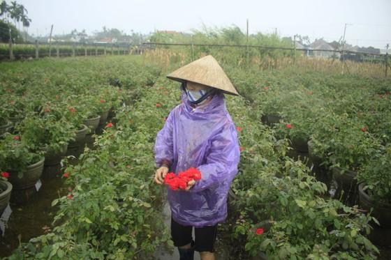 Mê mẩn hoa hồng rộ nở ở làng hoa Nghĩa Hiệp ảnh 16