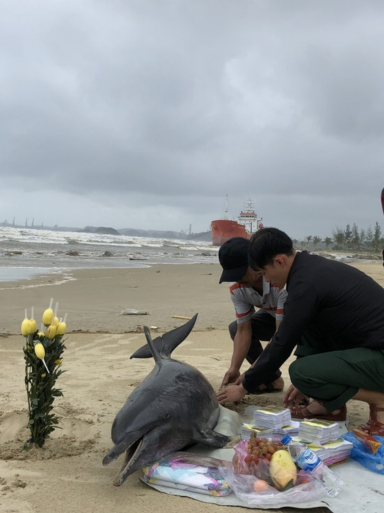 Phát hiện cá heo nặng 60kg trôi dạt vào bờ biển Quảng Ngãi ảnh 5
