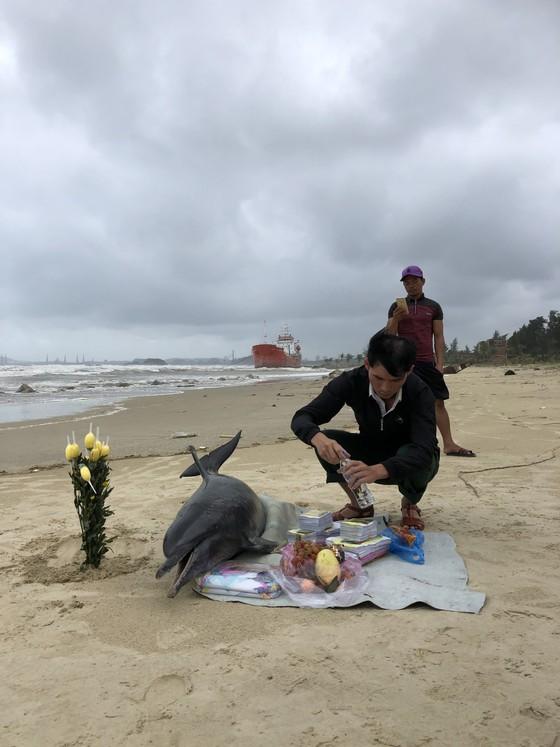 Phát hiện cá heo nặng 60kg trôi dạt vào bờ biển Quảng Ngãi ảnh 4