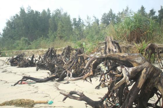 Xói lở bờ biển ở bãi biển Mỹ Khê, Quảng Ngãi ảnh 8