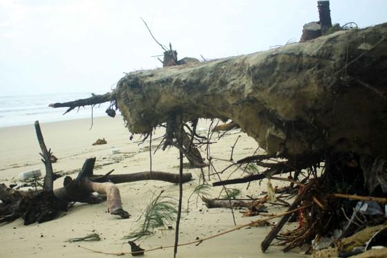 Xói lở bờ biển ở bãi biển Mỹ Khê, Quảng Ngãi ảnh 4