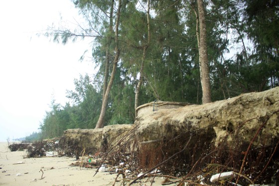 Xói lở bờ biển ở bãi biển Mỹ Khê, Quảng Ngãi ảnh 5