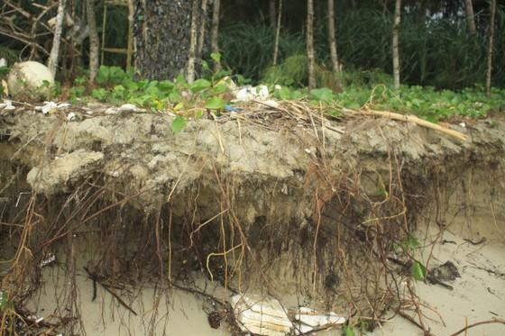 Xói lở bờ biển ở bãi biển Mỹ Khê, Quảng Ngãi ảnh 2