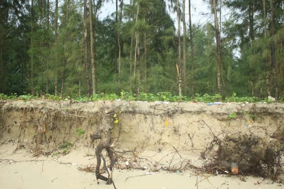 Xói lở bờ biển ở bãi biển Mỹ Khê, Quảng Ngãi ảnh 3