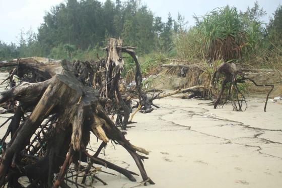 Xói lở bờ biển ở bãi biển Mỹ Khê, Quảng Ngãi ảnh 7