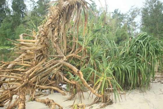 Xói lở bờ biển ở bãi biển Mỹ Khê, Quảng Ngãi ảnh 9