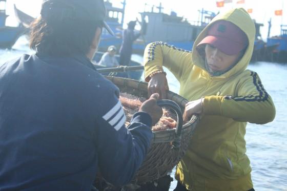Ngư dân Quảng Ngãi trúng đậm mùa ruốc biển  ảnh 4