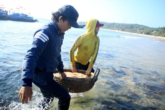 Ngư dân Quảng Ngãi trúng đậm mùa ruốc biển  ảnh 6