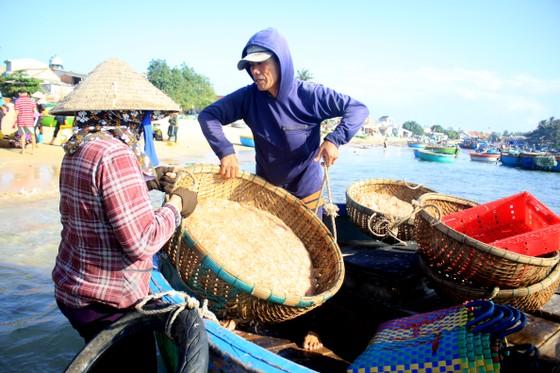 Ngư dân Quảng Ngãi trúng đậm mùa ruốc biển  ảnh 5
