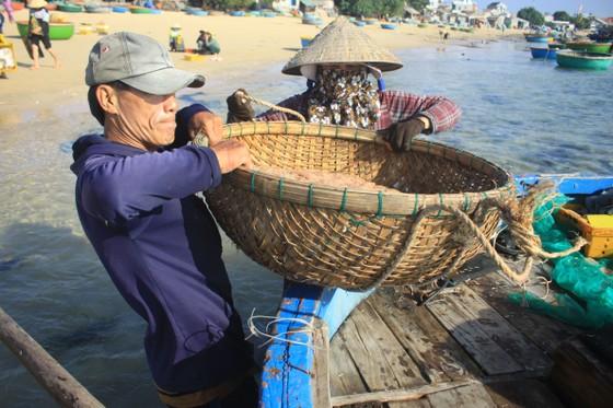 Ngư dân Quảng Ngãi trúng đậm mùa ruốc biển  ảnh 1