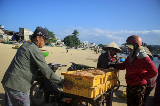 Ngư dân Quảng Ngãi trúng đậm mùa ruốc biển  ảnh 10