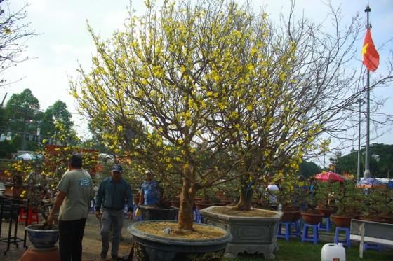 Quảng Ngãi: Nhộn nhịp chợ hoa sớm, hội xuân khai mở ảnh 3