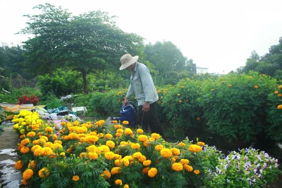 Quảng Ngãi: Nhộn nhịp chợ hoa sớm, hội xuân khai mở ảnh 4