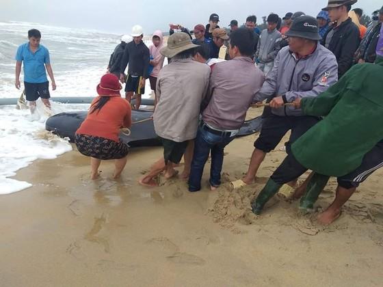 """Người dân """"giải cứu"""" Cá Ông Chuông dạt vào biển Quảng Ngãi ảnh 1"""