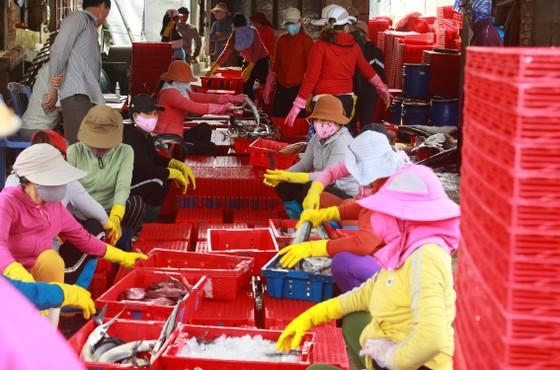 Trúng cá 'khủng' nhưng giá rẻ bèo, ngư dân Quảng Ngãi chịu lỗ  ảnh 2