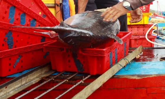 Trúng cá 'khủng' nhưng giá rẻ bèo, ngư dân Quảng Ngãi chịu lỗ  ảnh 8