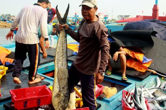 Trúng cá 'khủng' nhưng giá rẻ bèo, ngư dân Quảng Ngãi chịu lỗ  ảnh 6