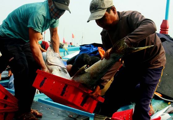 Trúng cá 'khủng' nhưng giá rẻ bèo, ngư dân Quảng Ngãi chịu lỗ  ảnh 5