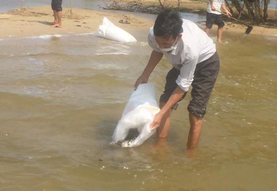 Quảng Ngãi: Thả 1,5 triệu giống tái tạo nguồn lợi thủy sản ảnh 3