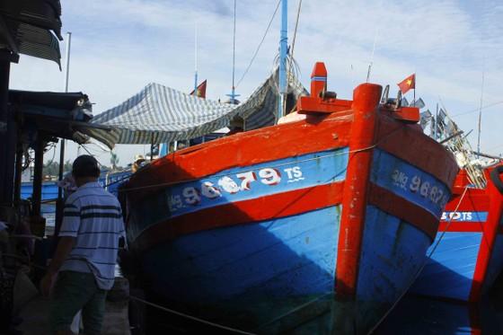 Quảng Ngãi: Hơn 1.100 tàu cá dài từ 15m được cấp giấy chứng nhận đủ điều kiện an toàn vệ sinh thực phẩm ảnh 1
