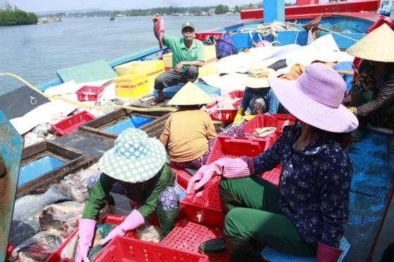 Quảng Ngãi: Hơn 1.100 tàu cá dài từ 15m được cấp giấy chứng nhận đủ điều kiện an toàn vệ sinh thực phẩm ảnh 2