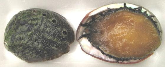 Đề xuất bảo tồn 5 nguồn gen hải sản nguy cấp, quý hiếm bản địa đảo Lý Sơn ảnh 2