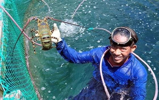 Đề xuất bảo tồn 5 nguồn gen hải sản nguy cấp, quý hiếm bản địa đảo Lý Sơn ảnh 3