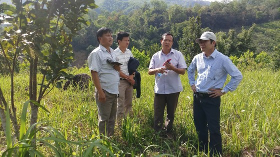 Hướng đến tạo vùng nguyên liệu mắc ca ở miền núi Sơn Tây, Quảng Ngãi ảnh 2