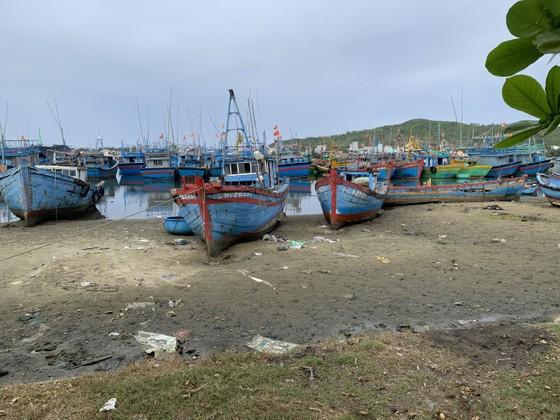 Giải pháp xử lý ô nhiễm môi trường từ xác tàu ở cảng cá Sa Huỳnh  ảnh 3