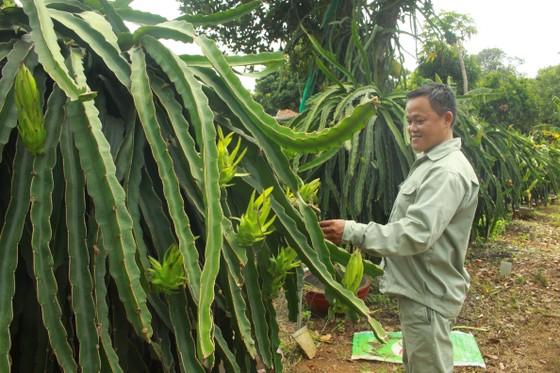 Nông dân Quảng Ngãi cải tiến thành công bộ tưới nước tự động 3 trong 1 ảnh 3
