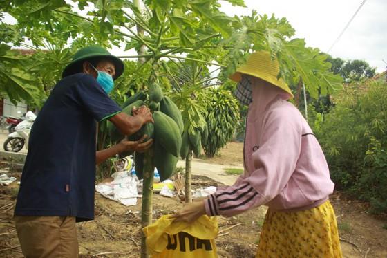 Nông dân hái rau hỗ trợ các khu cách ly ở Quảng Ngãi  ảnh 1
