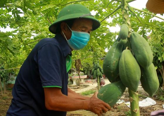 Nông dân hái rau hỗ trợ các khu cách ly ở Quảng Ngãi  ảnh 3
