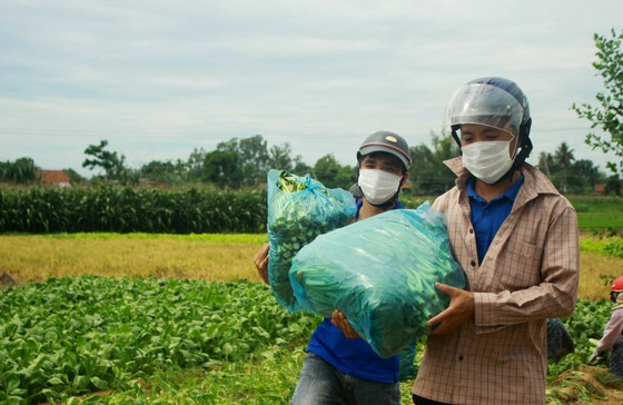 Nông dân hái rau hỗ trợ các khu cách ly ở Quảng Ngãi  ảnh 11