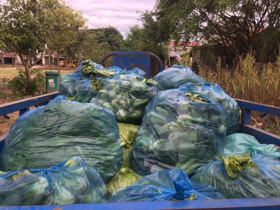 Nông dân hái rau hỗ trợ các khu cách ly ở Quảng Ngãi  ảnh 12