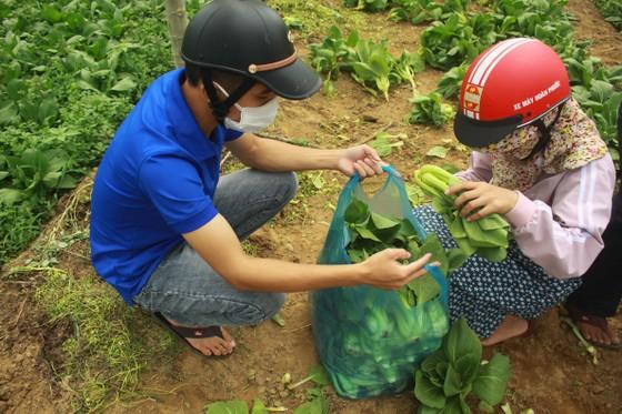 Nông dân hái rau hỗ trợ các khu cách ly ở Quảng Ngãi  ảnh 8