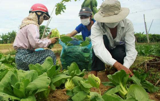 Nông dân hái rau hỗ trợ các khu cách ly ở Quảng Ngãi  ảnh 2