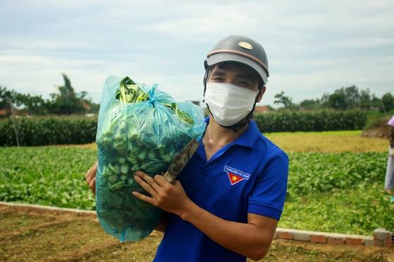 Nông dân hái rau hỗ trợ các khu cách ly ở Quảng Ngãi  ảnh 10