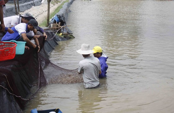 Hàng trăm hecta nông nghiệp và thủy sản tại Quảng Ngãi bị thiệt hại, lũ đang rút ảnh 5
